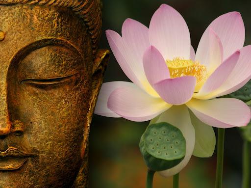 flor de loto oriental_magicodespertar